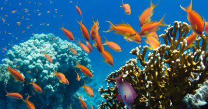 Undersea mining