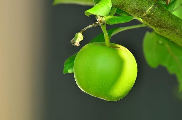 Green Apple Environment Award winner