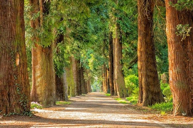 Billion Trees Campaign