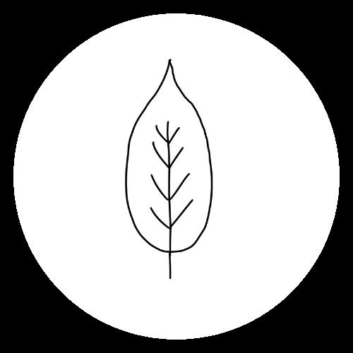 Sketch of a leaf